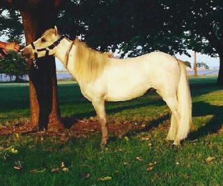 Honey I Shrunk The Horse