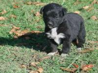 Remmington & Mendy Male Pup
