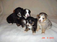 Click here to go the Dogs Page